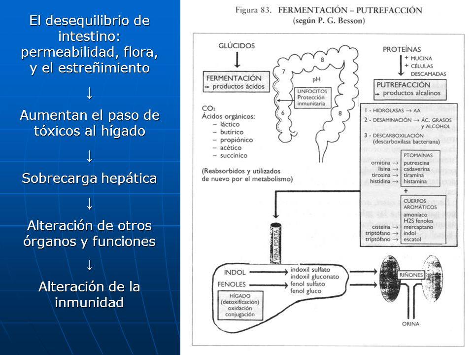 101 El desequilibrio de intestino: permeabilidad, flora, y el estreñimiento Aumentan el paso de tóxicos al hígado Sobrecarga hepática Alteración de ot