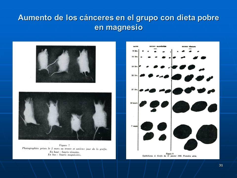 31 Aumento de los cánceres en el grupo con dieta pobre en magnesio