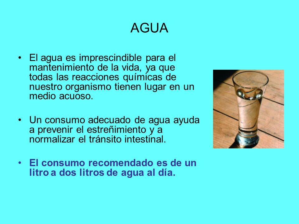 AGUA El agua es imprescindible para el mantenimiento de la vida, ya que todas las reacciones químicas de nuestro organismo tienen lugar en un medio acuoso.