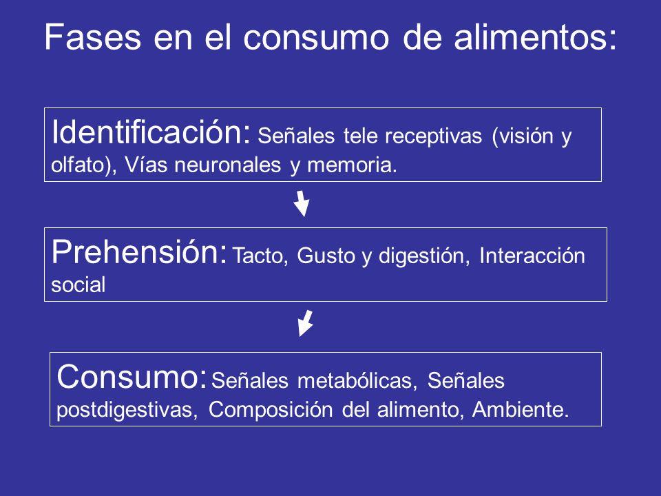 Fases en el consumo de alimentos: Identificación: Señales tele receptivas (visión y olfato), Vías neuronales y memoria. Prehensión: Tacto, Gusto y dig