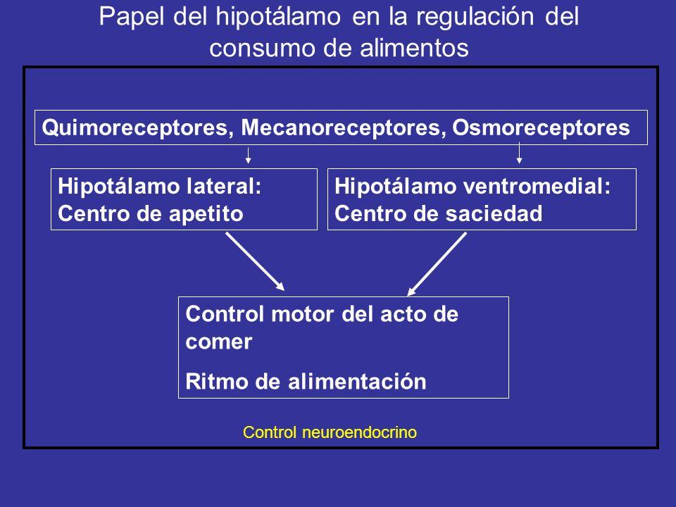 Papel del hipotálamo en la regulación del consumo de alimentos Hipotálamo lateral: Centro de apetito Hipotálamo ventromedial: Centro de saciedad Contr