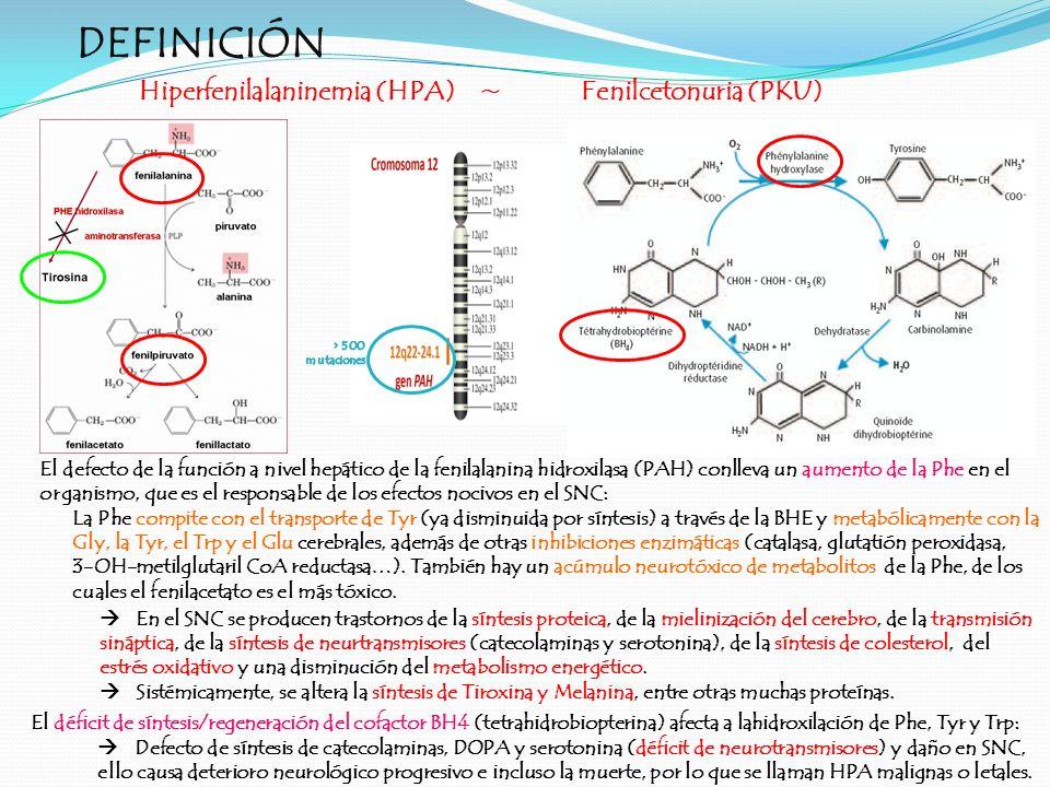 DEFINICIÓN Hiperfenilalaninemia (HPA)~Fenilcetonuria (PKU) El defecto de la función a nivel hepático de la fenilalanina hidroxilasa (PAH) conlleva un