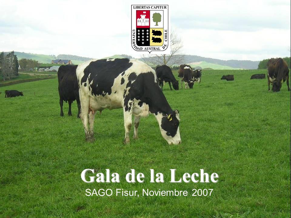 Gala de la Leche SAGO Fisur, Noviembre 2007