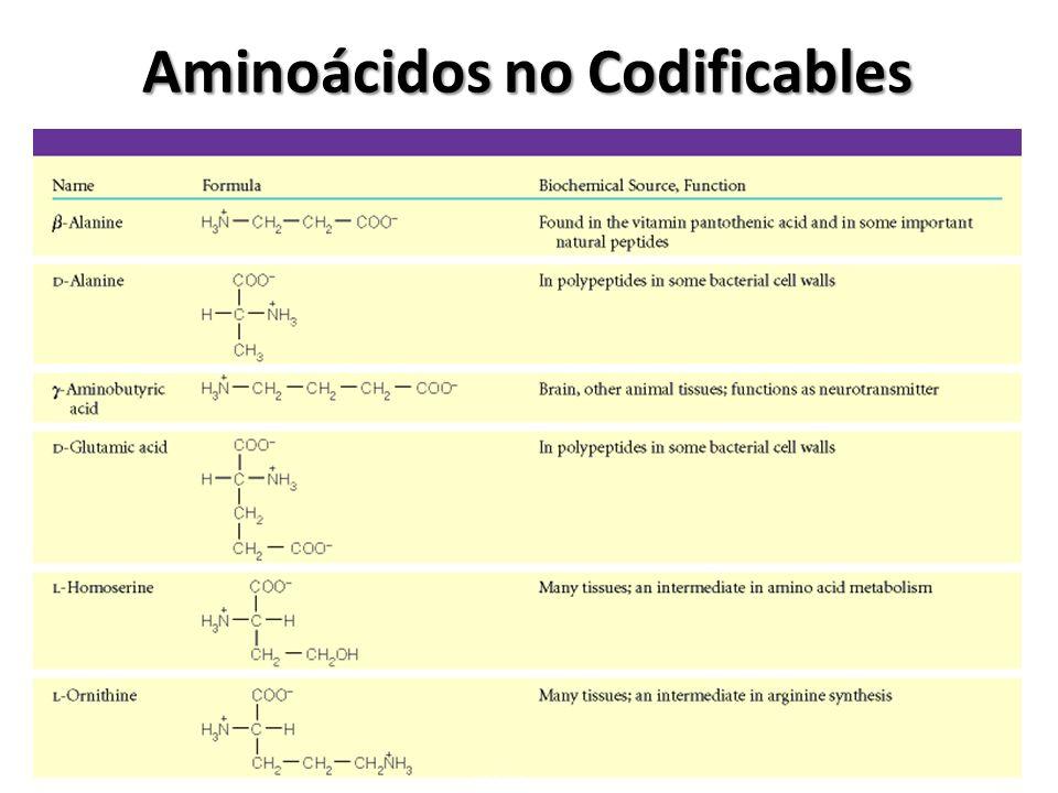 Aminoácidos no Codificables
