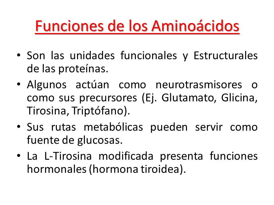 Funciones de los Aminoácidos Son las unidades funcionales y Estructurales de las proteínas. Algunos actúan como neurotrasmisores o como sus precursore