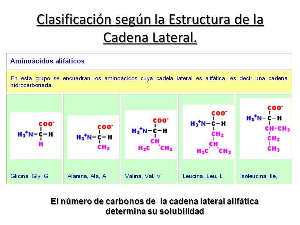 Clasificación según la Estructura de la Cadena Lateral. El número de carbonos de la cadena lateral alifática determina su solubilidad