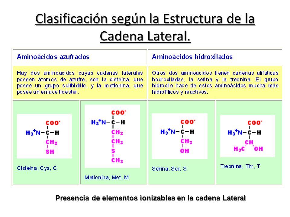 Presencia de elementos ionizables en la cadena Lateral