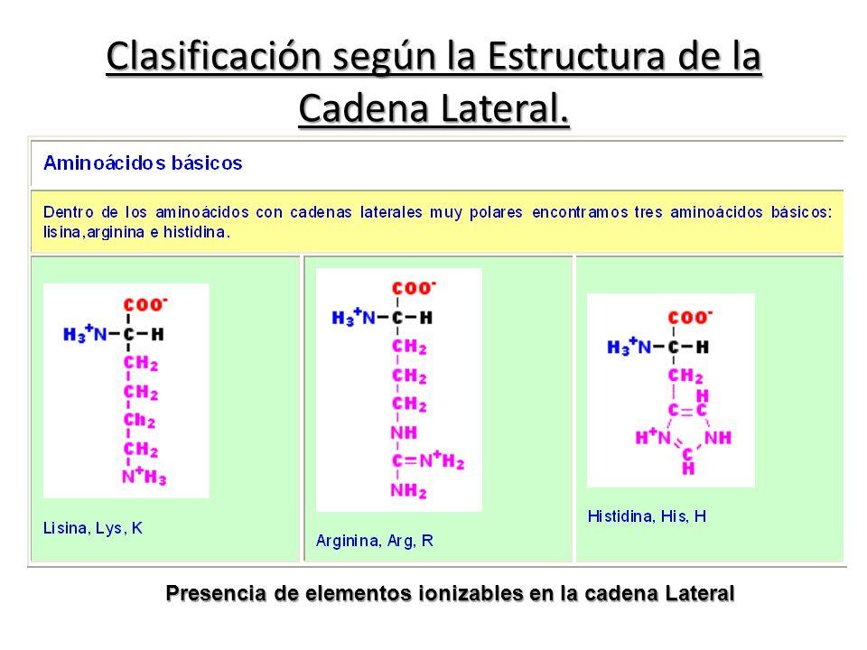 Clasificación según la Estructura de la Cadena Lateral. Presencia de elementos ionizables en la cadena Lateral