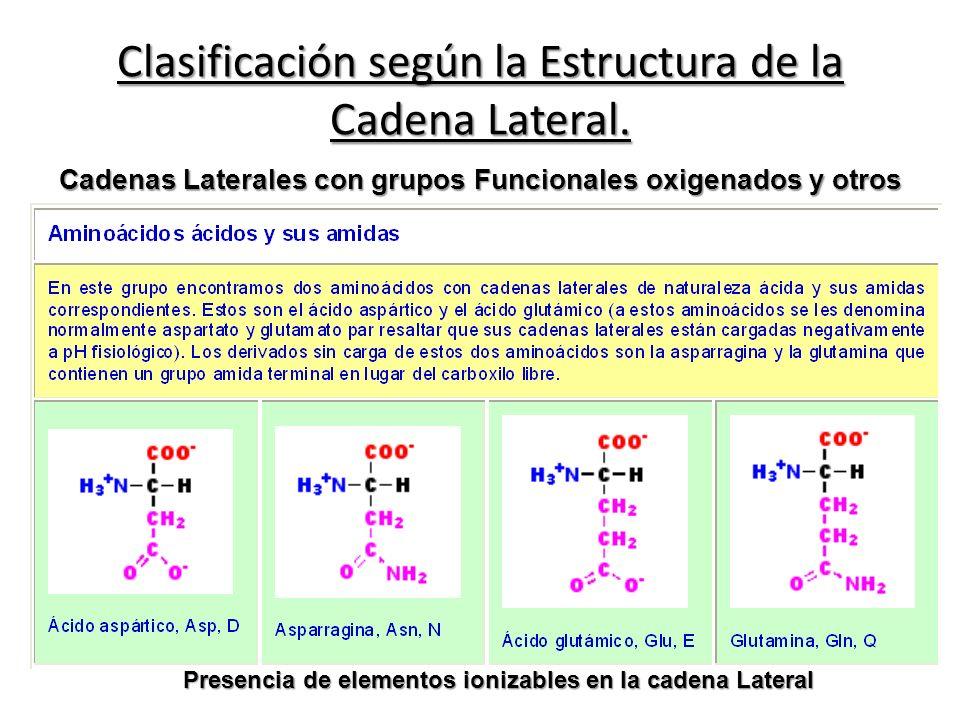Clasificación según la Estructura de la Cadena Lateral. Presencia de elementos ionizables en la cadena Lateral Cadenas Laterales con grupos Funcionale