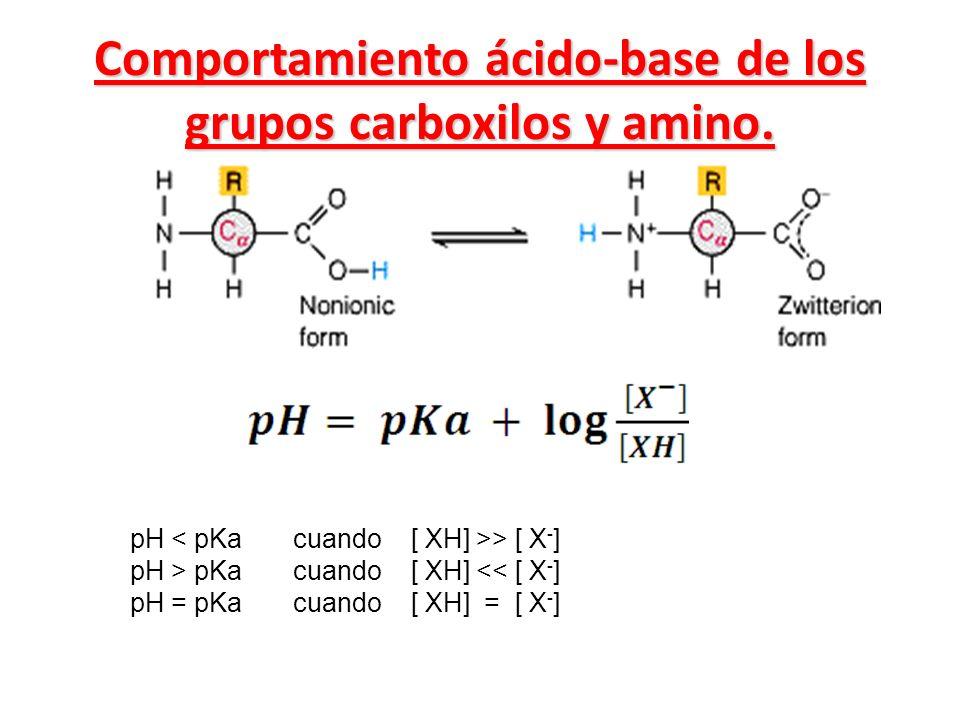 Comportamiento ácido-base de los grupos carboxilos y amino. pH > [ X - ] pH > pKa cuando [ XH] << [ X - ] pH = pKa cuando [ XH] = [ X - ]