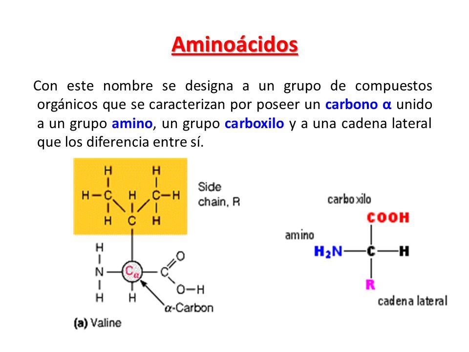 Aminoácidos Con este nombre se designa a un grupo de compuestos orgánicos que se caracterizan por poseer un carbono α unido a un grupo amino, un grupo