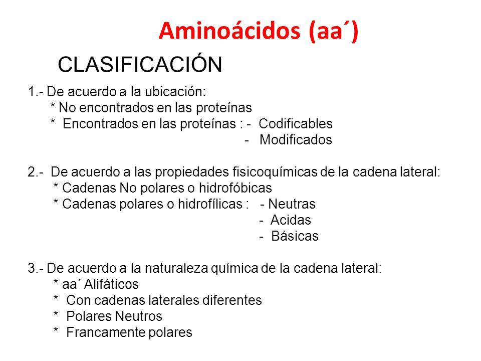 Aminoácidos (aa´) CLASIFICACIÓN 1.- De acuerdo a la ubicación: * No encontrados en las proteínas * Encontrados en las proteínas : - Codificables - Mod