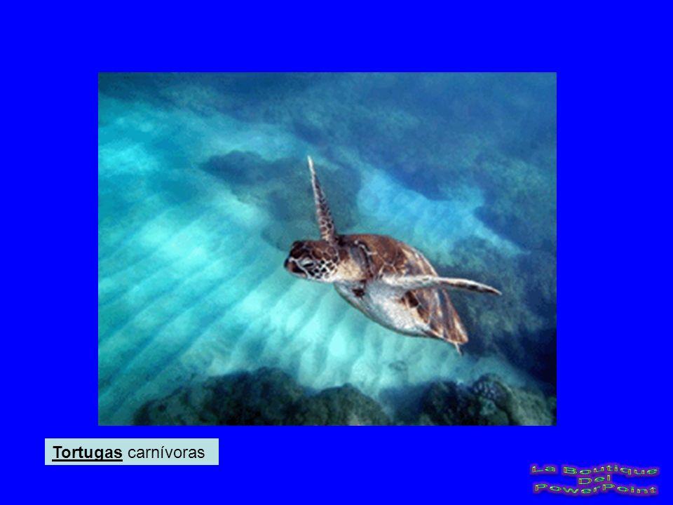 Tortugas carnívoras