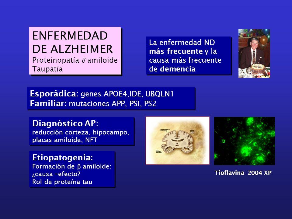 ENFERMEDAD DE ALZHEIMER Proteinopatía amiloide Taupatía ENFERMEDAD DE ALZHEIMER Proteinopatía amiloide Taupatía Esporádica: genes APOE4,IDE, UBQLN1 Fa