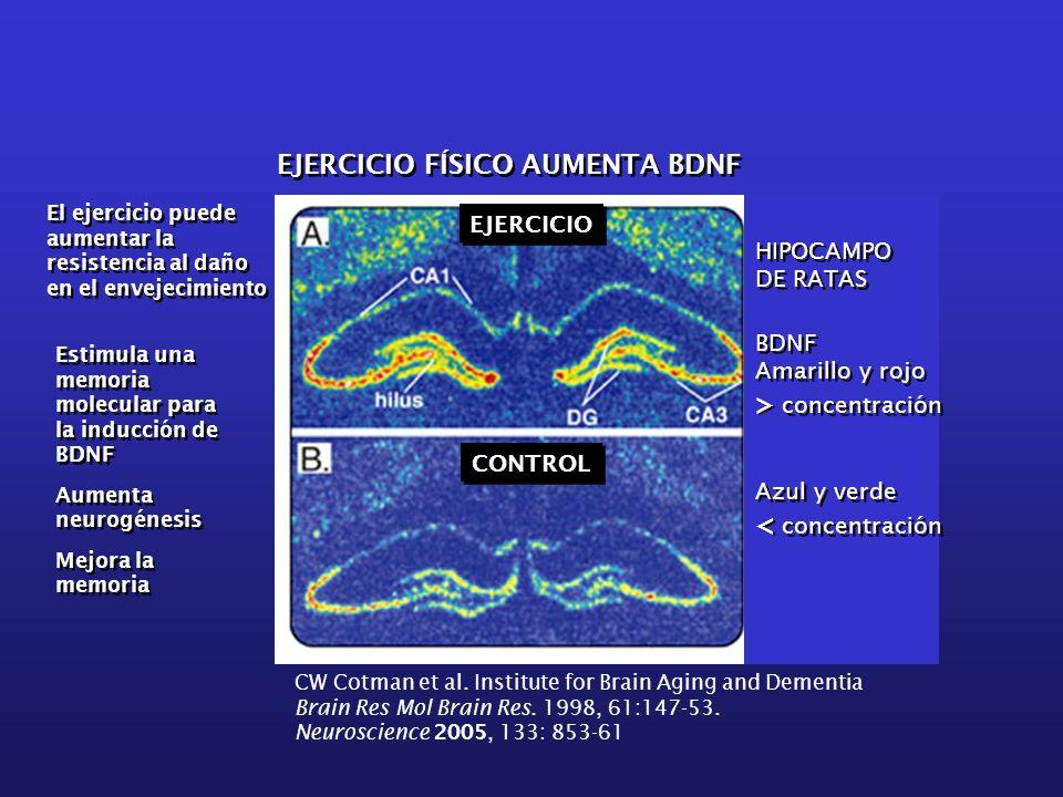 EJERCICIO FÍSICO AUMENTA BDNF EJERCICIO CONTROL BDNF Amarillo y rojo > concentración Azul y verde < concentración BDNF Amarillo y rojo > concentración