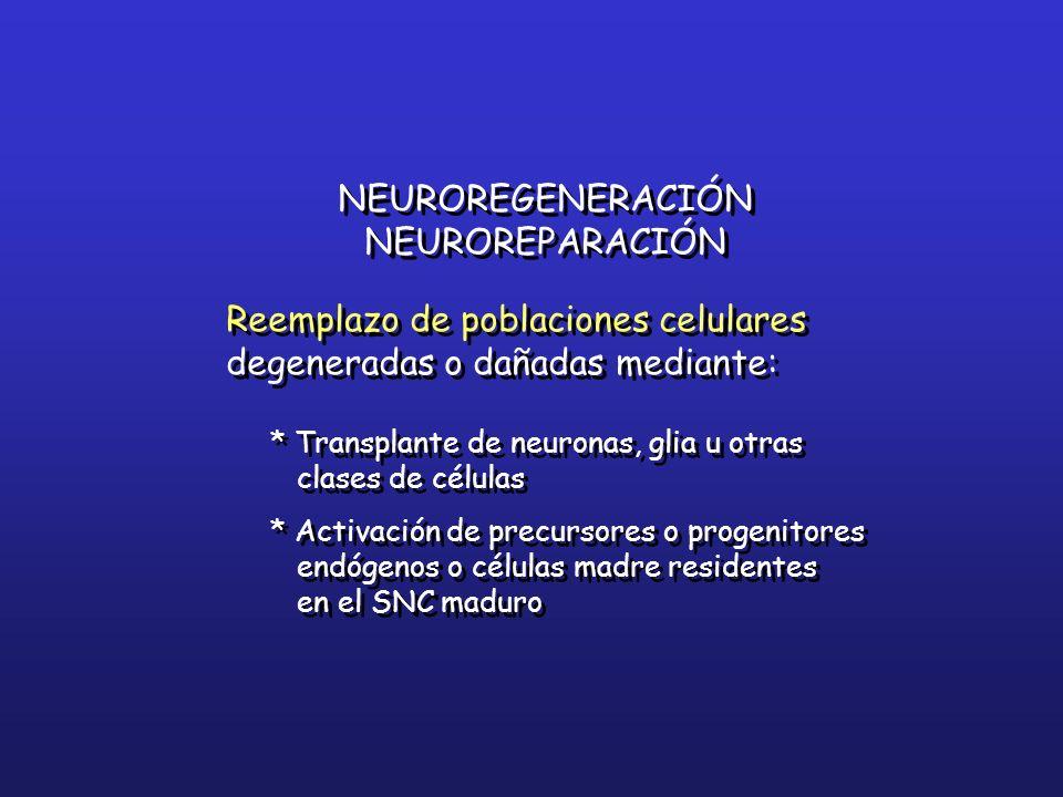 NEUROREGENERACIÓN NEUROREPARACIÓN Reemplazo de poblaciones celulares degeneradas o dañadas mediante: * Transplante de neuronas, glia u otras clases de