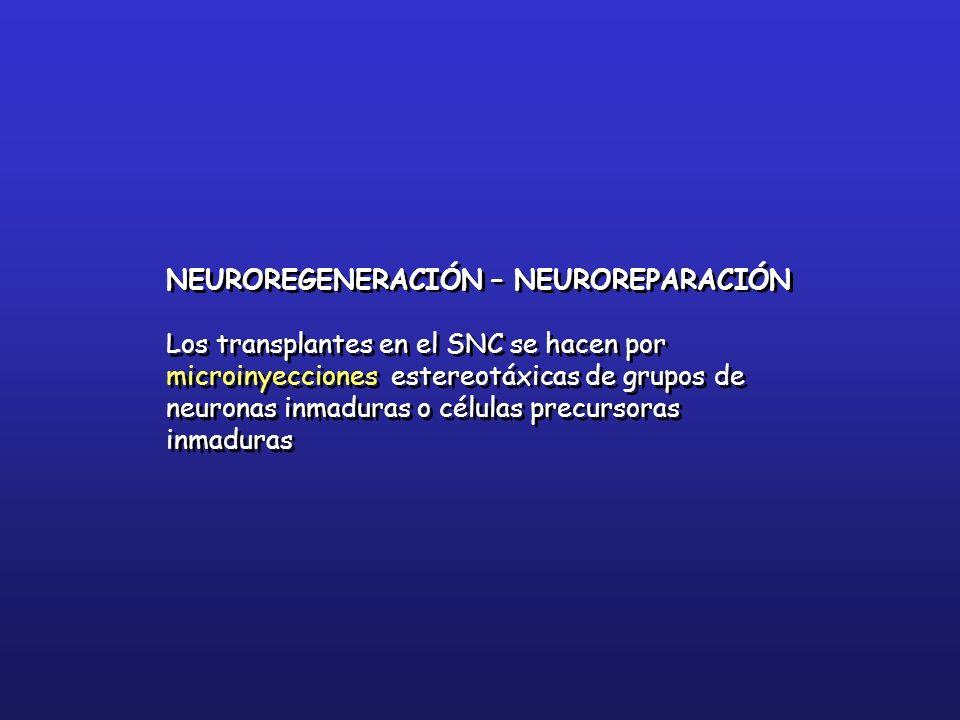 NEUROREGENERACIÓN – NEUROREPARACIÓN Los transplantes en el SNC se hacen por microinyecciones estereotáxicas de grupos de neuronas inmaduras o células