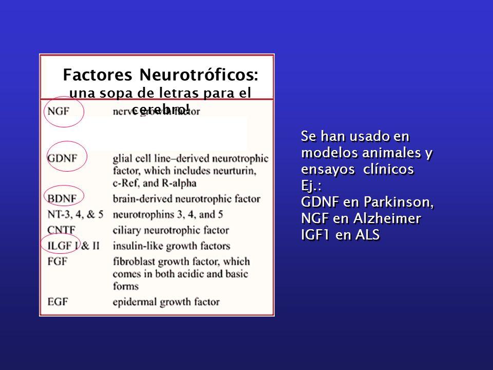Factores Neurotróficos: una sopa de letras para el cerebro! Se han usado en modelos animales y ensayos clínicos Ej.: GDNF en Parkinson, NGF en Alzheim