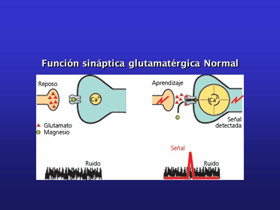 Función sináptica glutamatérgica Normal