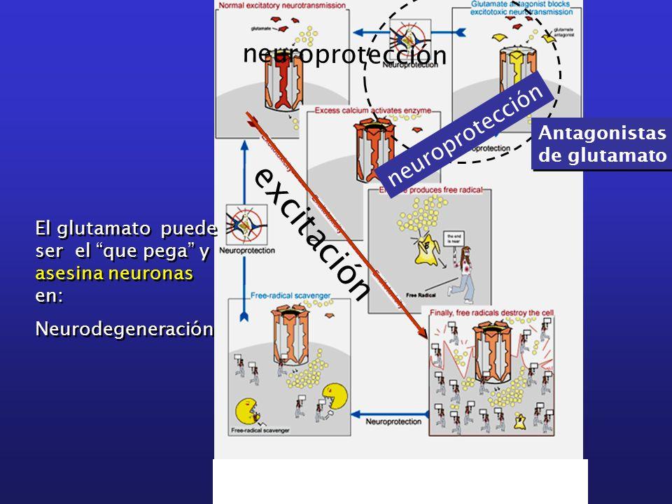 excitación neuroprotección Antagonistas de glutamato Antagonistas de glutamato El glutamato puede ser el que pega y asesina neuronas en: Neurodegenera
