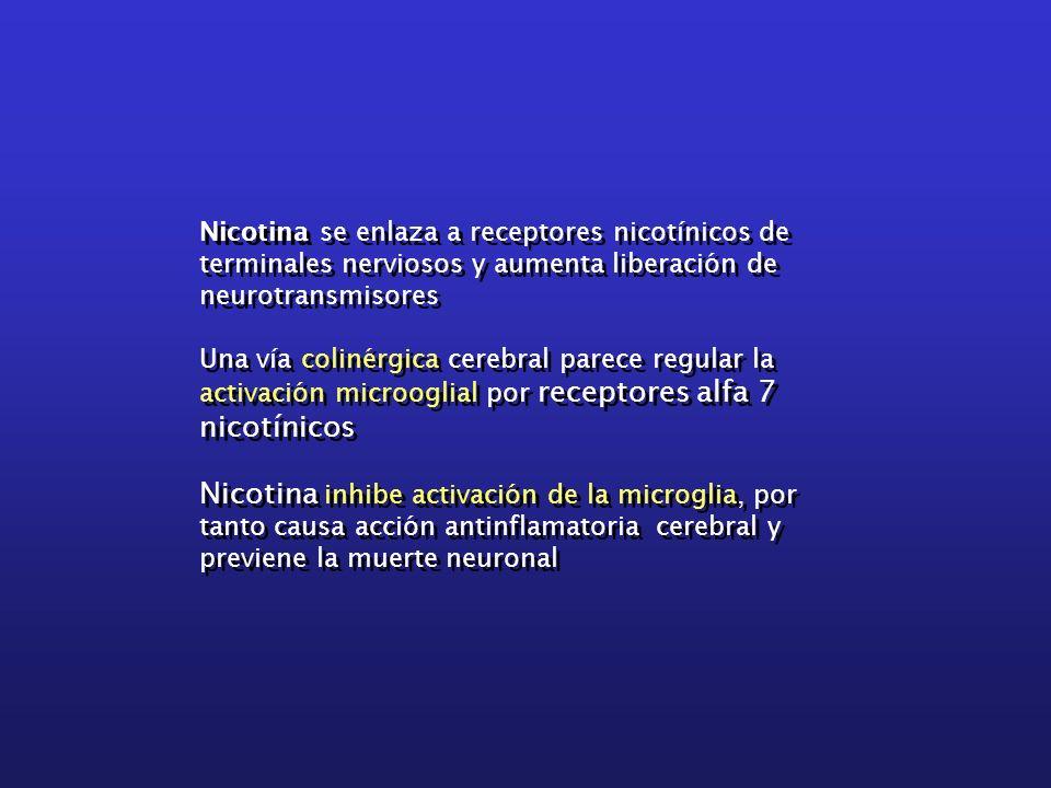 Nicotina se enlaza a receptores nicotínicos de terminales nerviosos y aumenta liberación de neurotransmisores Una vía colinérgica cerebral parece regu