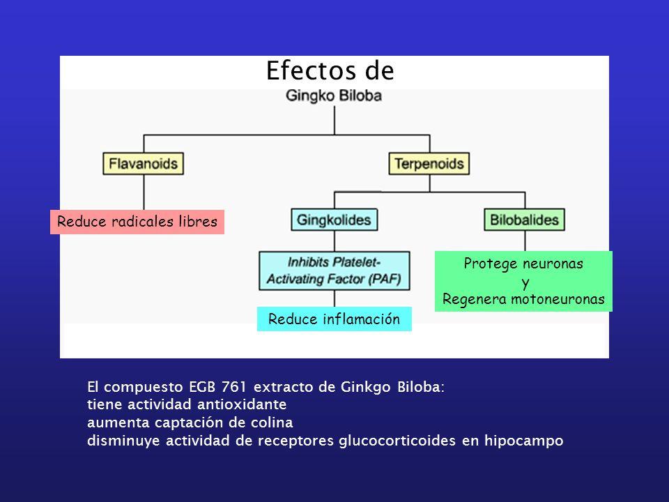 El compuesto EGB 761 extracto de Ginkgo Biloba: tiene actividad antioxidante aumenta captación de colina disminuye actividad de receptores glucocortic