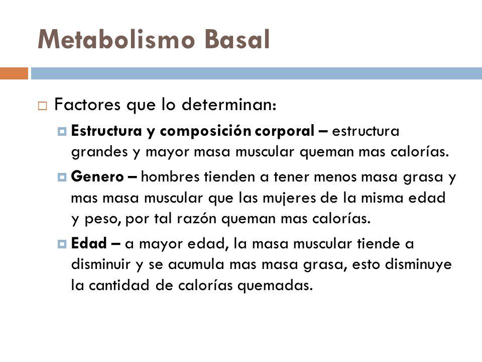 Metabolismo Basal Factores que lo determinan: Estructura y composición corporal – estructura grandes y mayor masa muscular queman mas calorías.