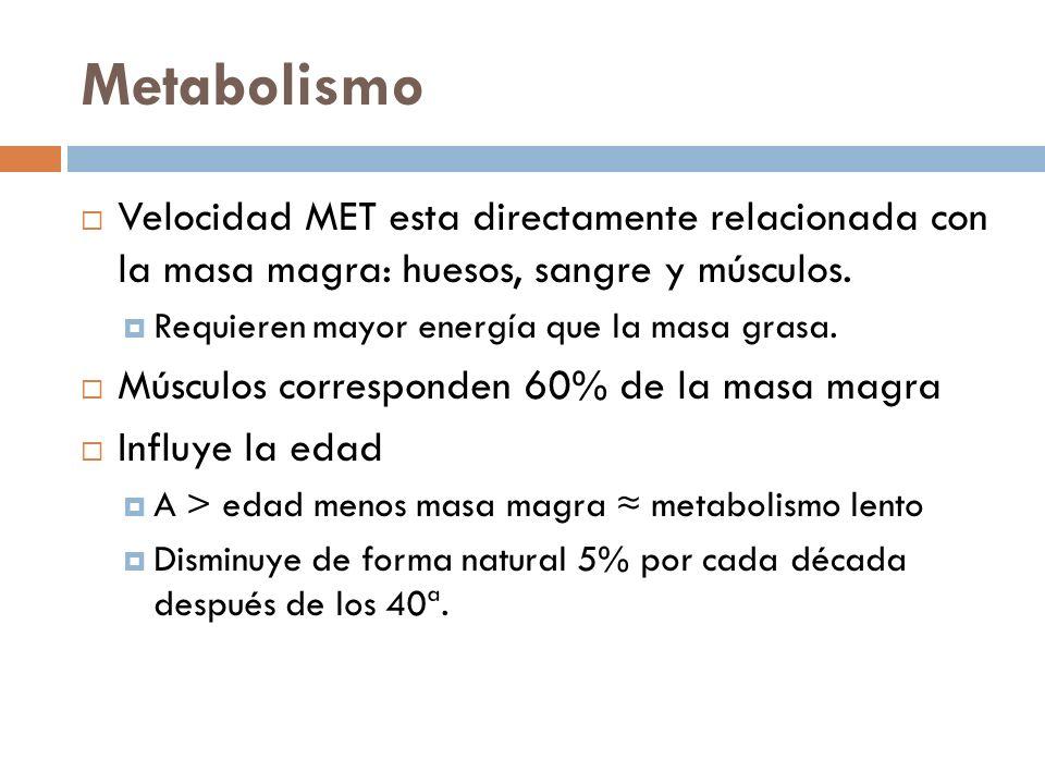 Metabolismo Velocidad MET esta directamente relacionada con la masa magra: huesos, sangre y músculos. Requieren mayor energía que la masa grasa. Múscu