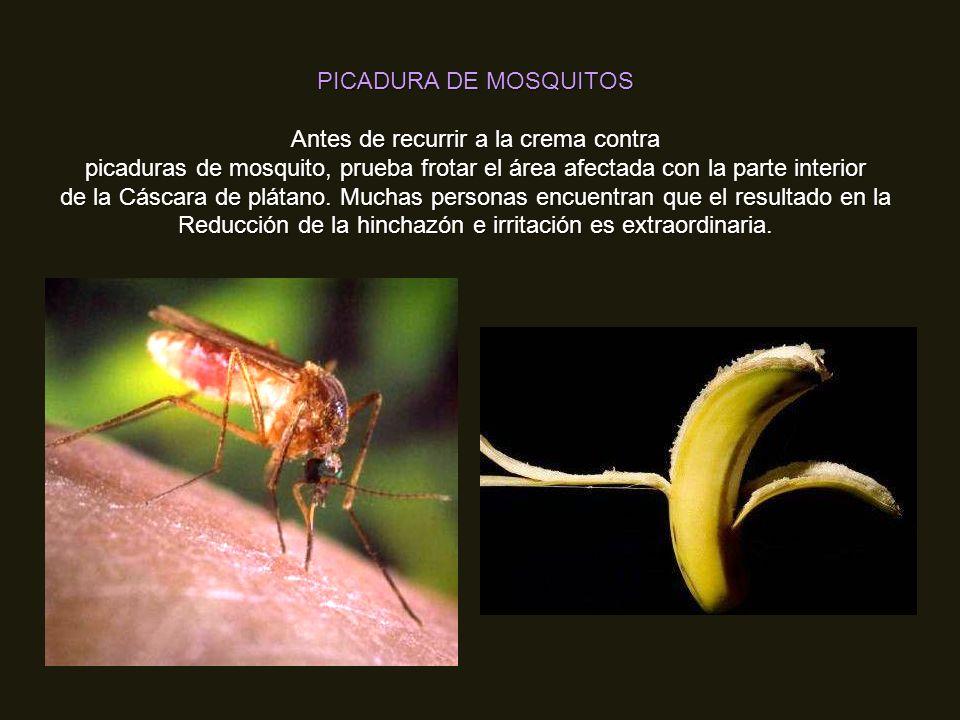 ACIDEZ Los plátanos tienen un efecto antiácido natural en el cuerpo, o sea que si sufres de acidez, come un plátano para obtener un calmante alivio.
