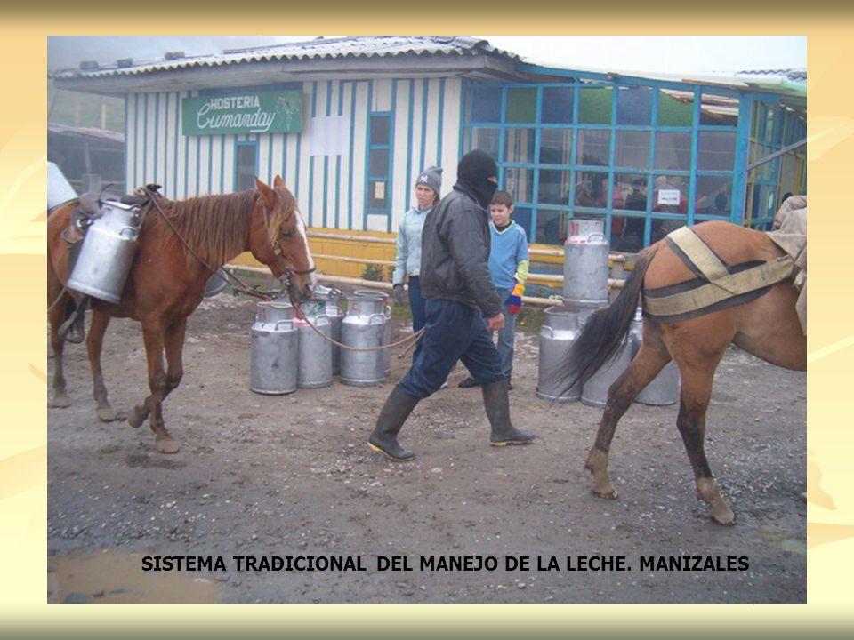 SISTEMA TRADICIONAL DEL MANEJO DE LA LECHE. MANIZALES