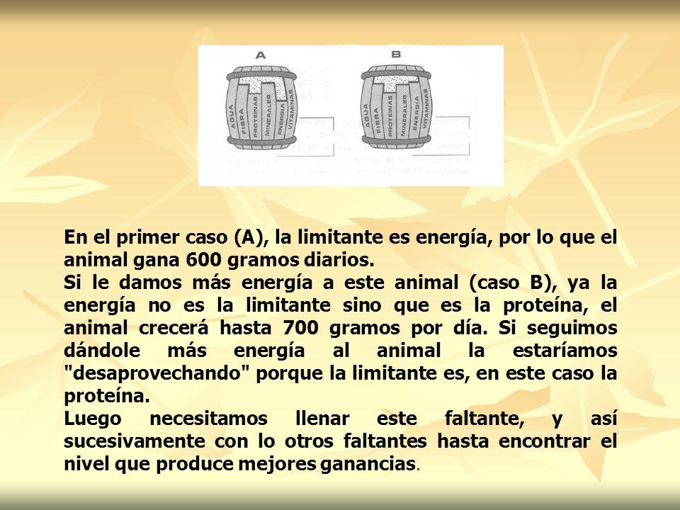 En el primer caso (A), la limitante es energía, por lo que el animal gana 600 gramos diarios. Si le damos más energía a este animal (caso B), ya la en