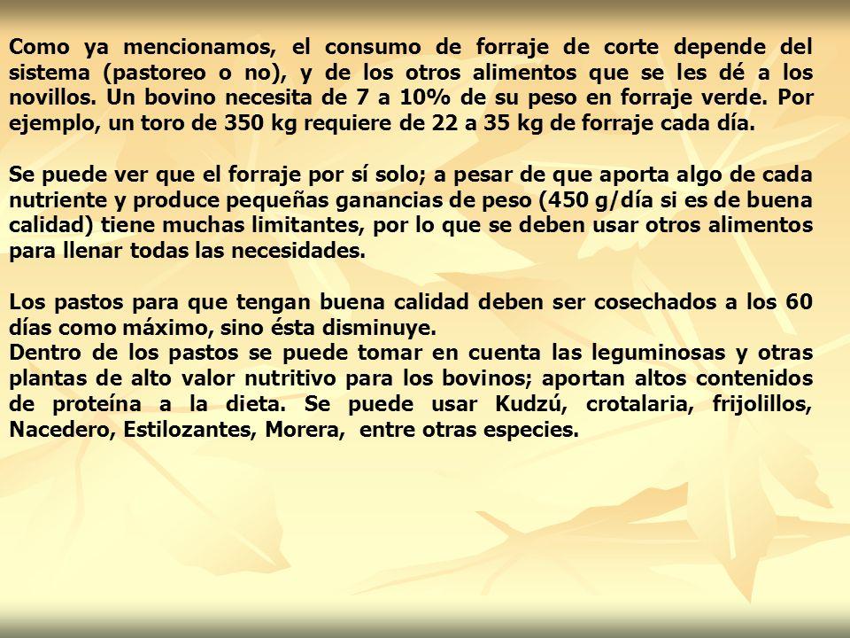Como ya mencionamos, el consumo de forraje de corte depende del sistema (pastoreo o no), y de los otros alimentos que se les dé a los novillos. Un bov