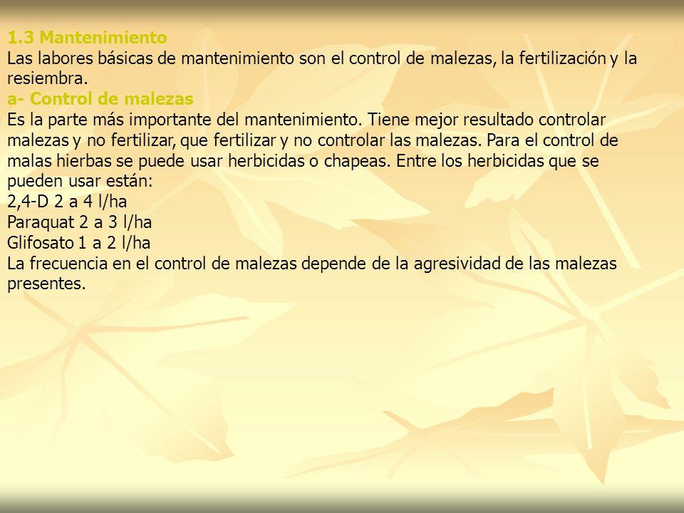 1.3 Mantenimiento Las labores básicas de mantenimiento son el control de malezas, la fertilización y la resiembra. a- Control de malezas Es la parte m