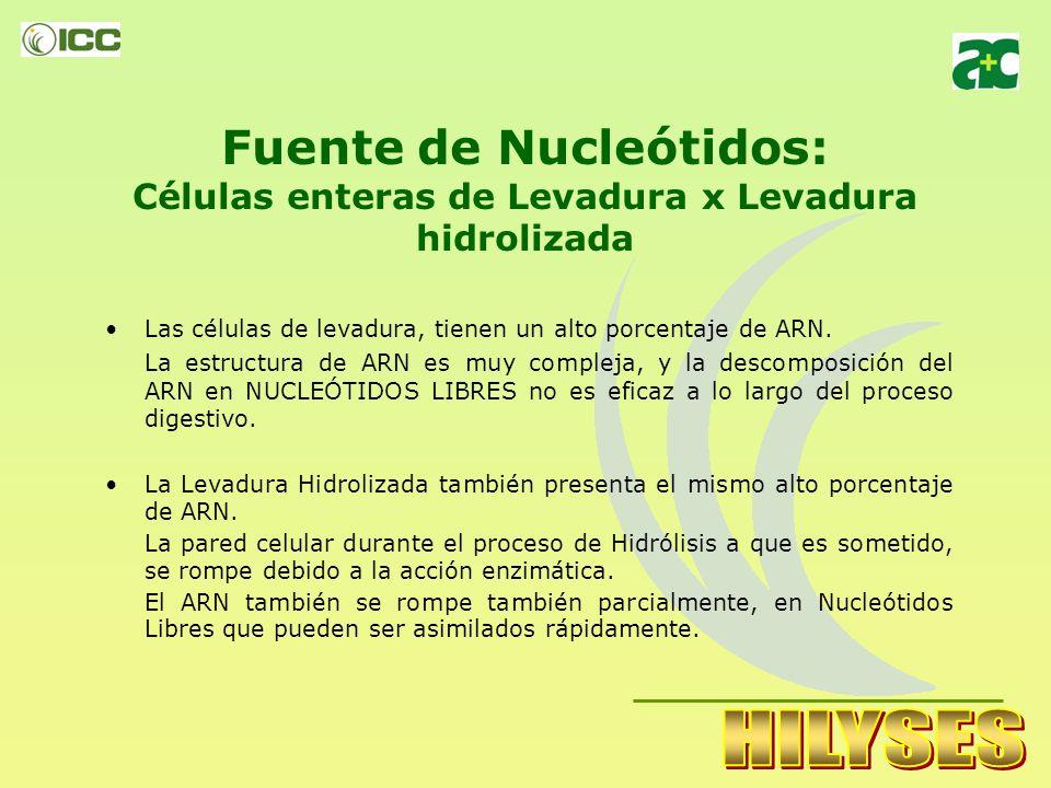 SUMINISTRO de NUCLEOTIDOS LIBRES en la RACION Los Nucleótidos son pequeñas estructuras formadas por ácidos nucleicos: ADN y RNA. Los Nucleótidos están
