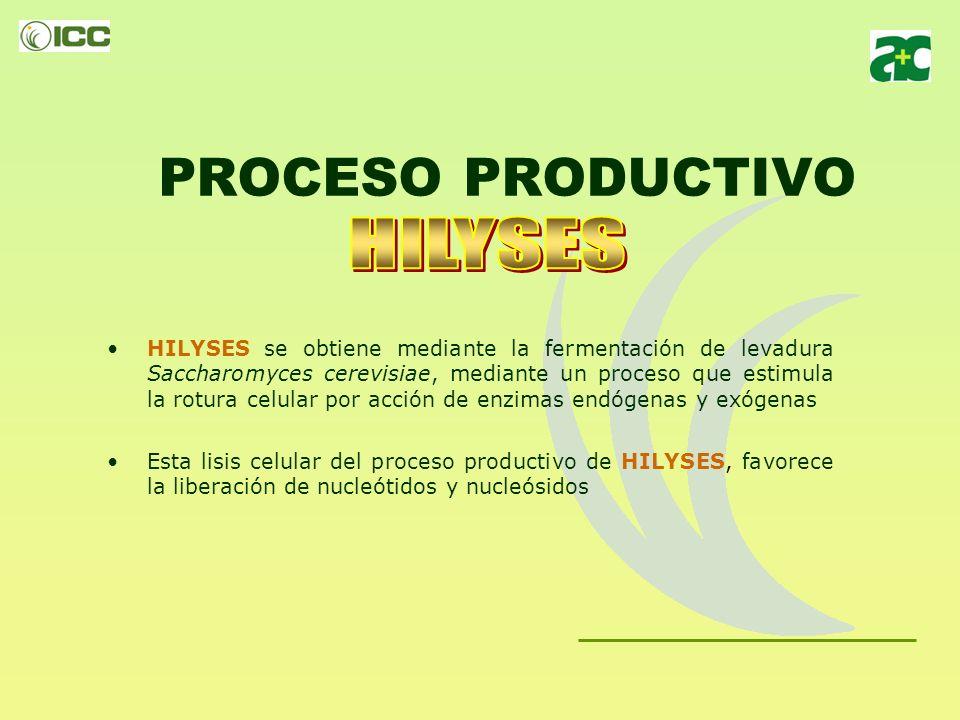 Actuación de HILYSES Incluyendo HILYSES en los piensos, -levadura hidrolizada rica en Nucleótidos Libres -, se facilita la multiplicación celular, haciendo que esta ocurra con un coste energético mucho menor.