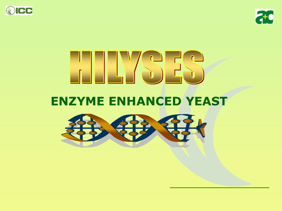 ENZYME ENHANCED YEAST