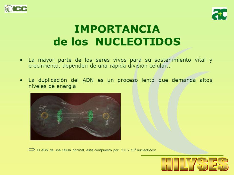 IMPORTANCIA de los NUCLEOTIDOS La mayor parte de los seres vivos para su sostenimiento vital y crecimiento, dependen de una rápida división celular..