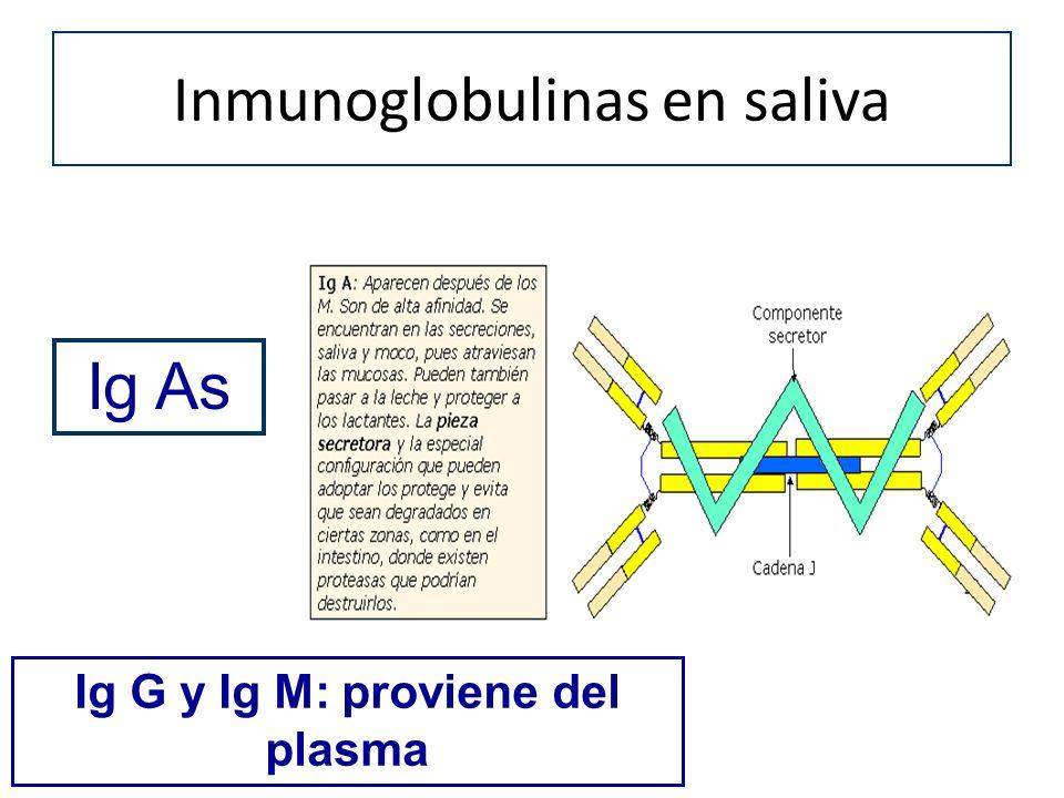 Inmunoglobulinas en saliva Ig As Ig G y Ig M: proviene del plasma