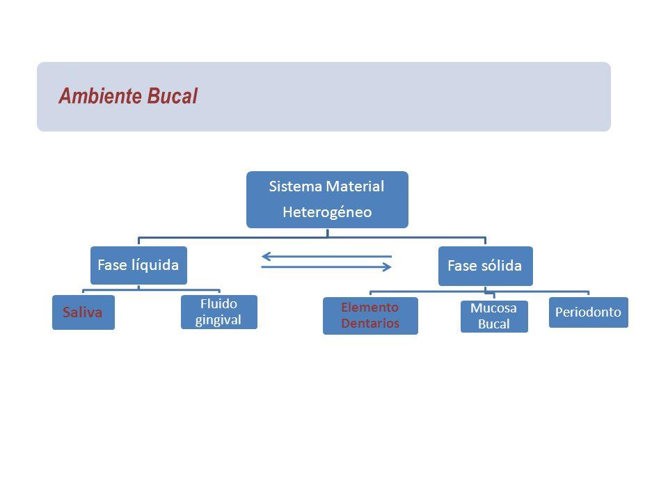 Ambiente Bucal Sistema Material Heterogéneo Fase líquida Saliva Fluido gingival Fase sólida Elemento Dentarios Mucosa Bucal Periodonto