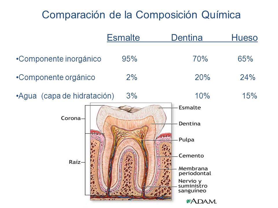 Comparación de la Composición Química Esmalte Dentina Hueso Componente inorgánico 95% 70% 65% Componente orgánico 2% 20% 24% Agua (capa de hidratación) 3% 10% 15%