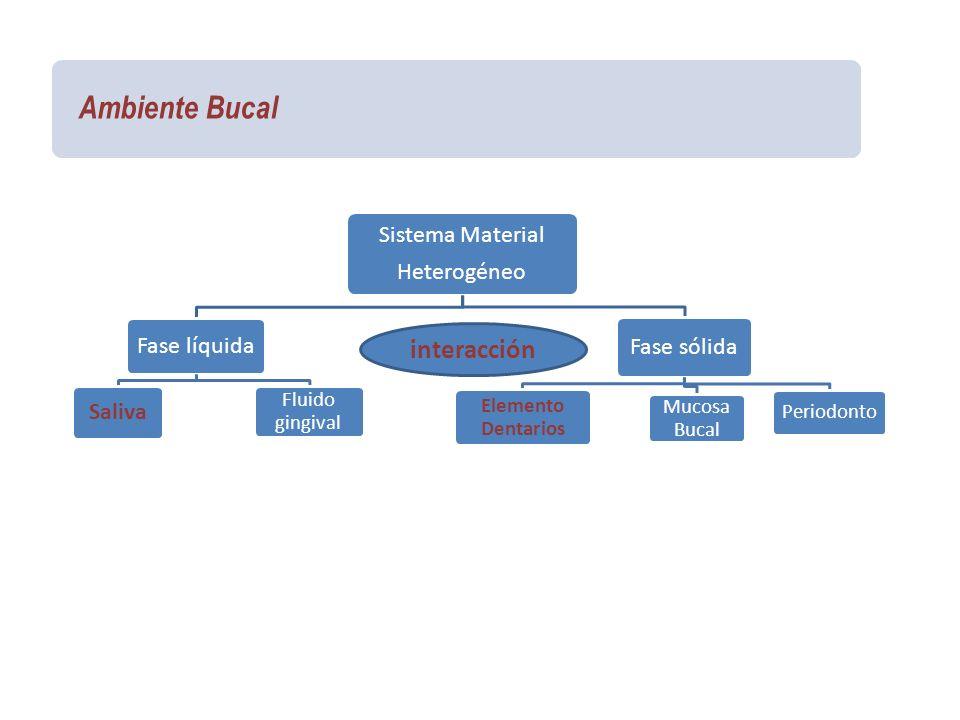 Ambiente Bucal Sistema Material Heterogéneo Fase líquida Saliva Fluido gingival Fase sólida Elemento Dentarios Mucosa Bucal Periodonto interacción