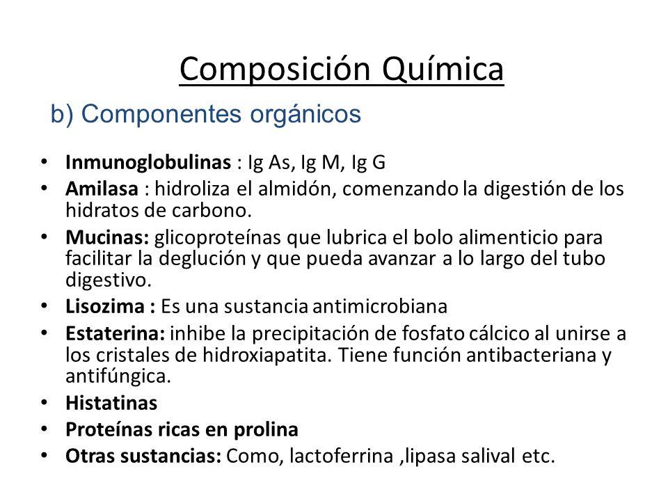 Inmunoglobulinas : Ig As, Ig M, Ig G Amilasa : hidroliza el almidón, comenzando la digestión de los hidratos de carbono.