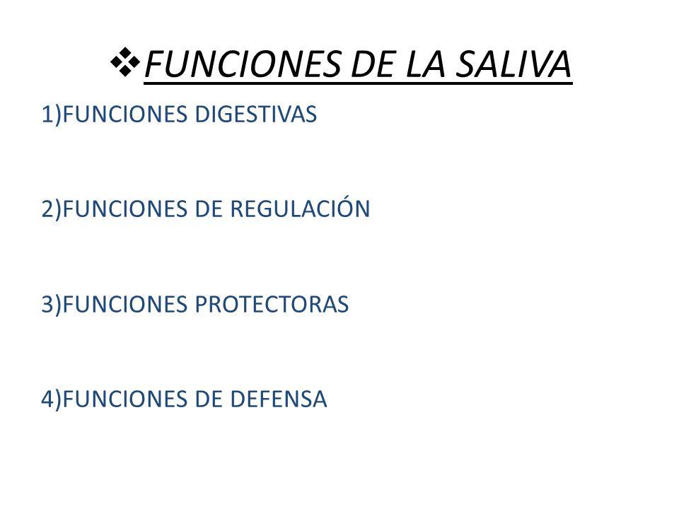 FUNCIONES DE LA SALIVA 1)FUNCIONES DIGESTIVAS 2)FUNCIONES DE REGULACIÓN 3)FUNCIONES PROTECTORAS 4)FUNCIONES DE DEFENSA