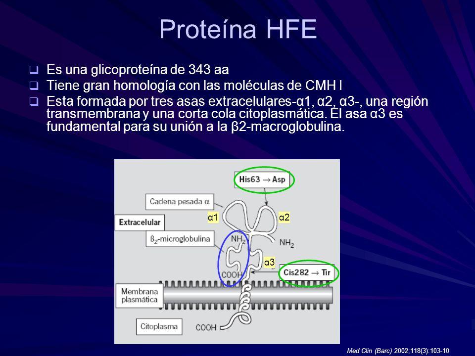 Proteína HFE Es una glicoproteína de 343 aa Tiene gran homología con las moléculas de CMH I Esta formada por tres asas extracelulares-α1, α2, α3-, una