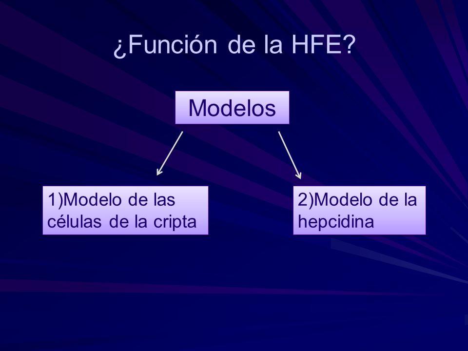 ¿Función de la HFE? Modelos 1)Modelo de las células de la cripta 2)Modelo de la hepcidina 2)Modelo de la hepcidina
