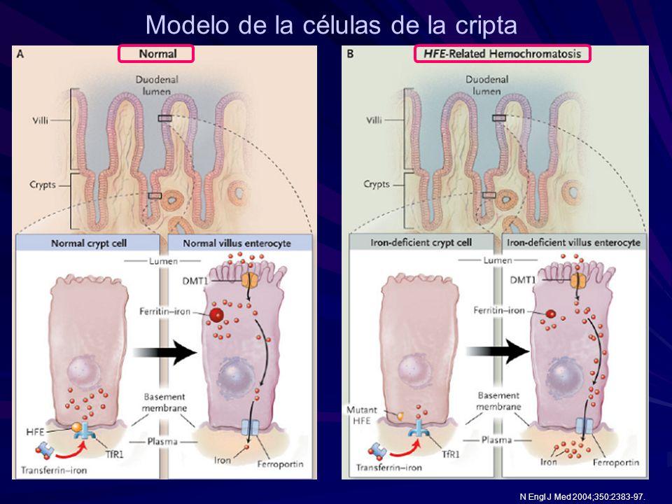 Modelo de la células de la cripta N Engl J Med 2004;350:2383-97.