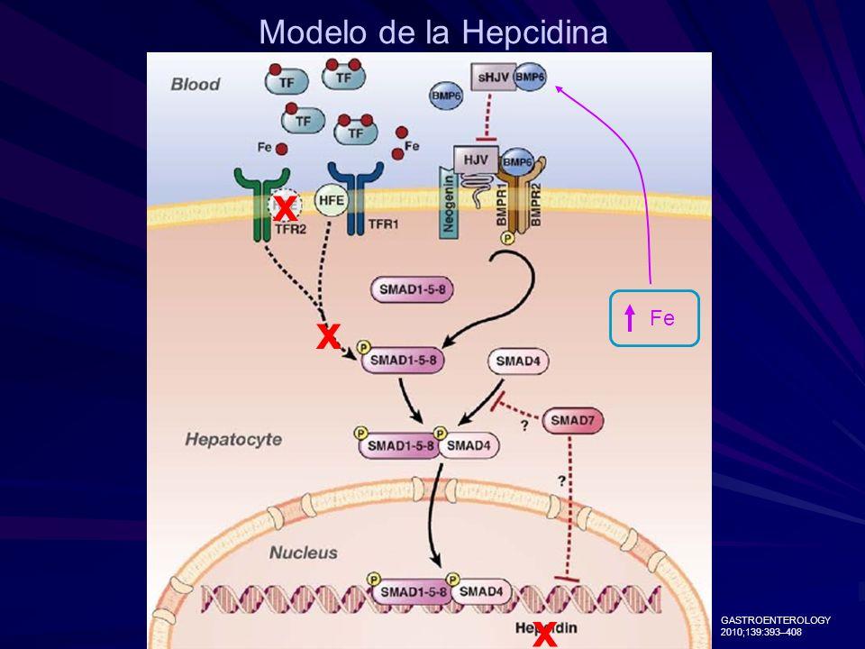 Modelo de la Hepcidina Fe GASTROENTEROLOGY 2010;139:393–408 x x x
