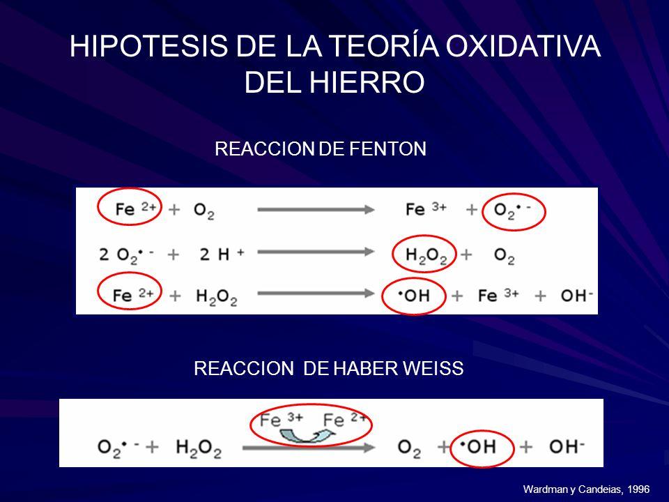 HIPOTESIS DE LA TEORÍA OXIDATIVA DEL HIERRO REACCION DE FENTON REACCION DE HABER WEISS Wardman y Candeias, 1996