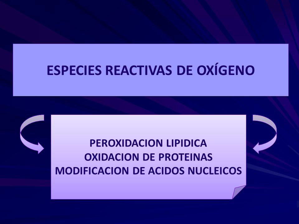 ESPECIES REACTIVAS DE OXÍGENO PEROXIDACION LIPIDICA OXIDACION DE PROTEINAS MODIFICACION DE ACIDOS NUCLEICOS PEROXIDACION LIPIDICA OXIDACION DE PROTEIN