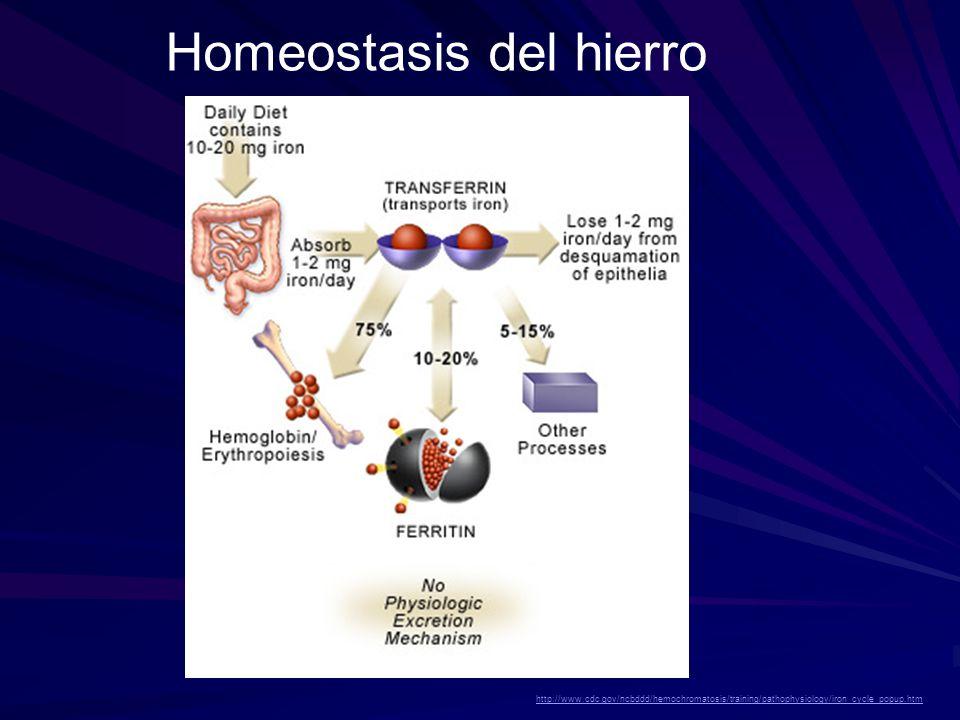Depósito de Fe en hepatocitos, Células de Kupffer y del epitelio biliar.
